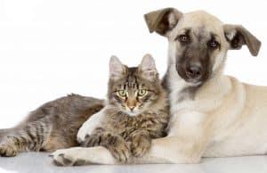 fundación de animales
