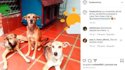 fundación de animales en Venezuela