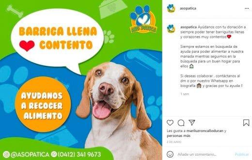 fundaciones de perros en Venezuela