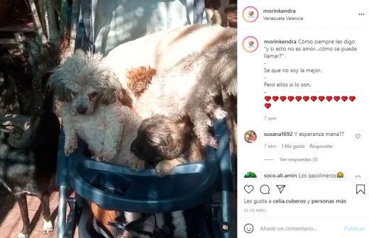 Fundaciones de ayuda animal