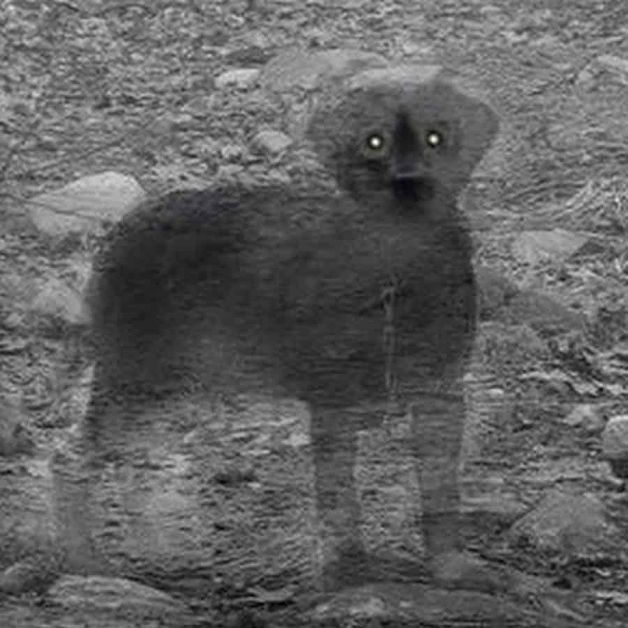 leyendas venezolanas perro de la pastora