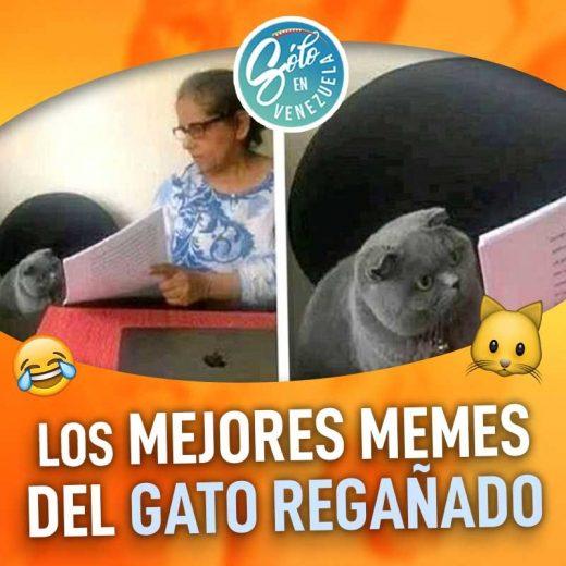 Los Mejores Memes Del Gato Gris Regañado Solo En Venezuela