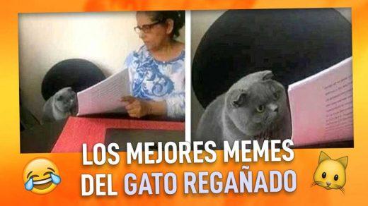 memes del gato regañado