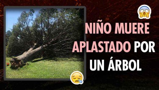 Niño muere aplastado por un árbol en Catia