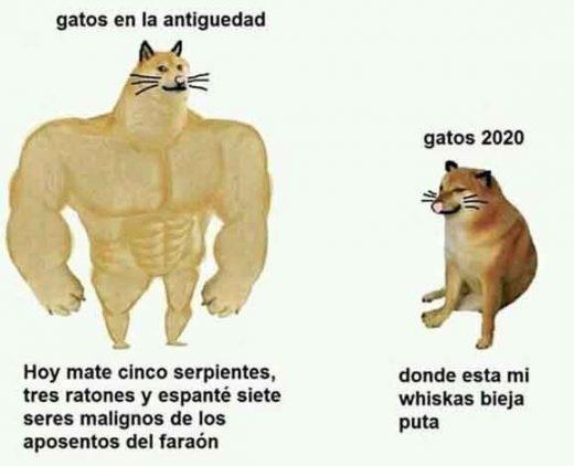 meme perro grande perro pequeño gatos