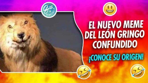 memes del leon gringo