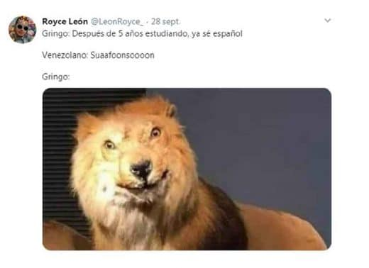 meme del leon suanfonson