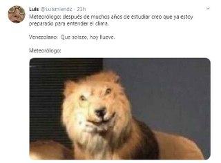 meme del leon disecado