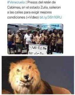 memes del leon confundido