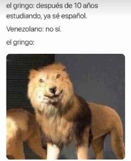 meme del leon gringo no si