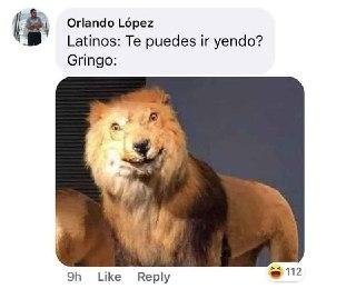 meme leon gringo te puedes ir yendo