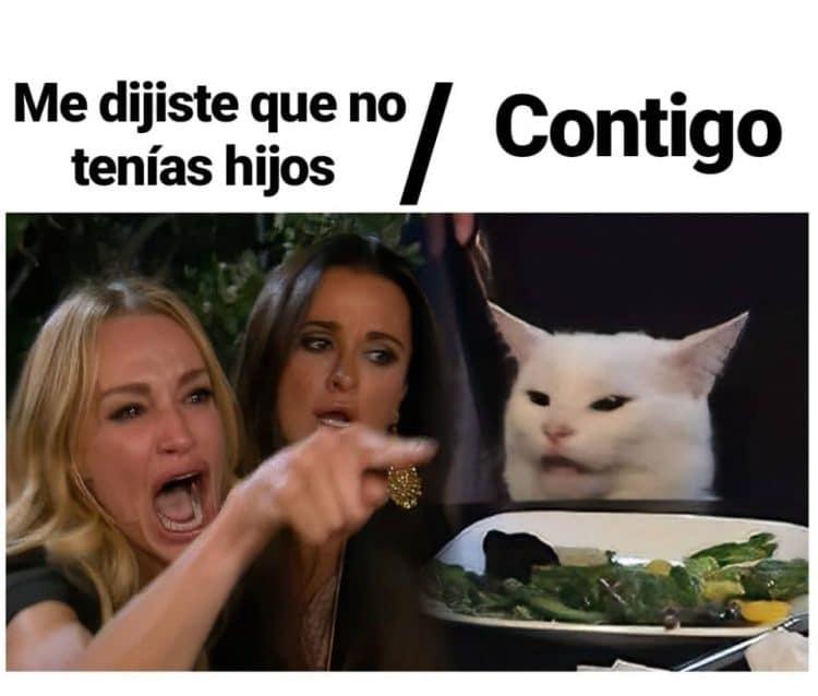 mejores memes gato en la mesa