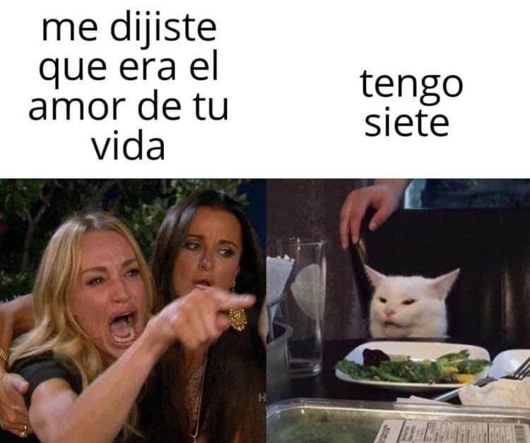 memes gato en la mesa