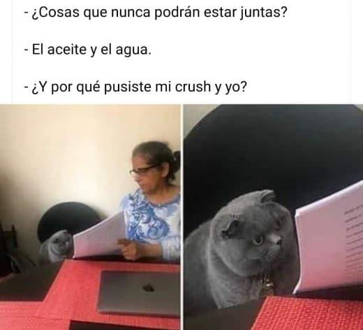 memes gato gris y maestra