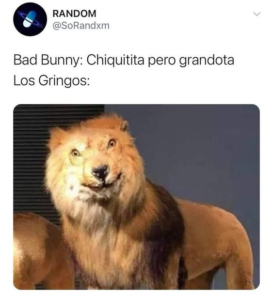Meme del leon gringo