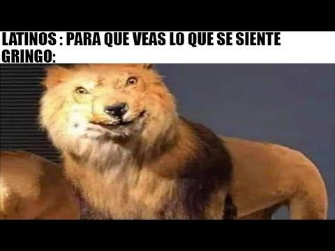 mejores memes del leon gringo
