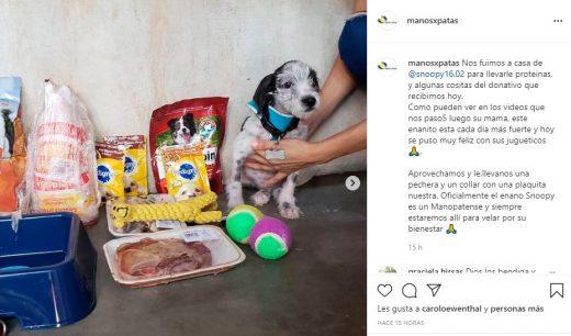 fundaciones que ayudan a animales de la calle