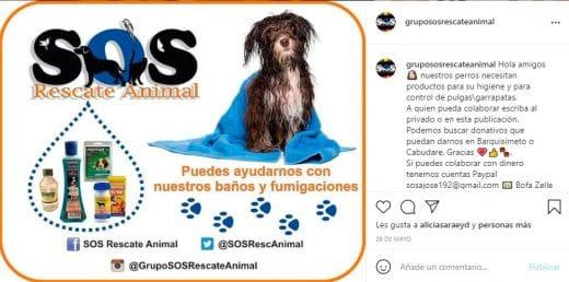 grupos de rescate animal en Venezuela