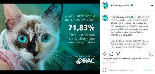 red de apoyo canino en Venezuela