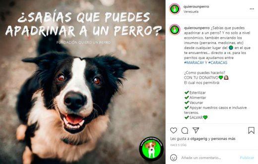 fundaciones de adopción animal en Venezuela