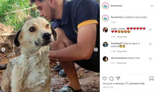 organizaciones de ayuda animal en Venezuela