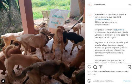 fundación animal en Caracas
