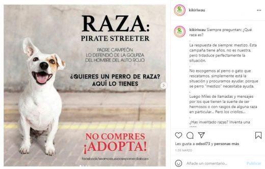 fundaciones de perros en Caracas
