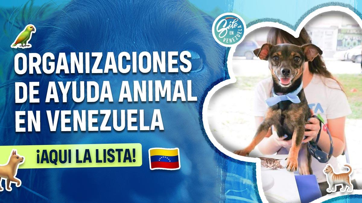 Organizaciones de protección animal